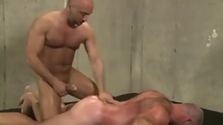 Hairy Muscle Bear Gets Fucked Rough